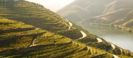 Os sucalcos da vinha são imagem de marca do Douro