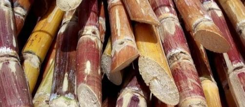 Produção de energia por biomassa: futuro promissor