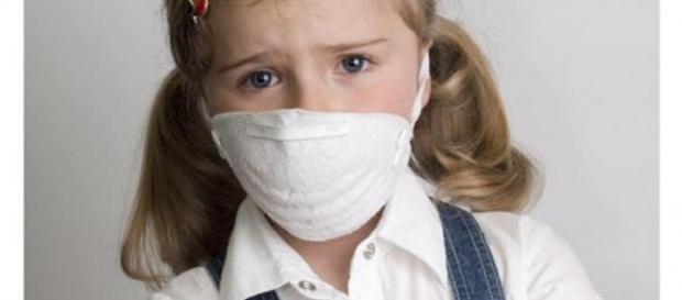 gripa, virus, porcina, sanatate