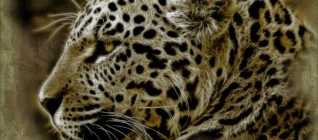 Hoje é o Dia Mundial da Vida Selvagem