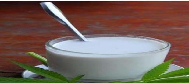 Laptele de canepa: izvor al sanatatii