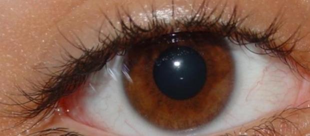 En el futuro los ojos podrán ser reemplazados