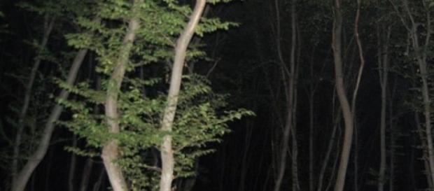 Padurea Baciu, judetul Cluj