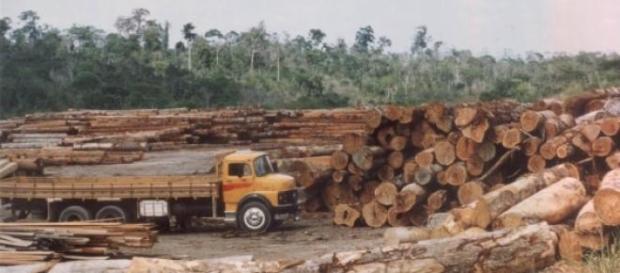 Desmatamento na Amazônia cresce quase 300%