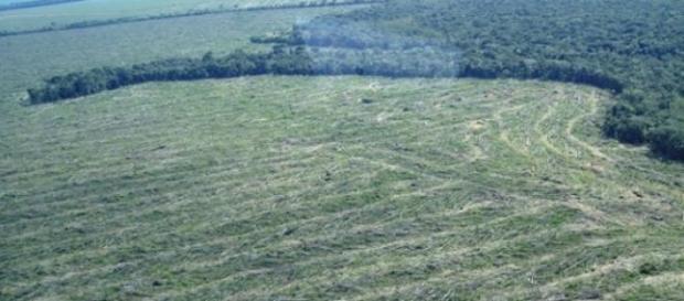 Desmatamento na Floresta Amazônia