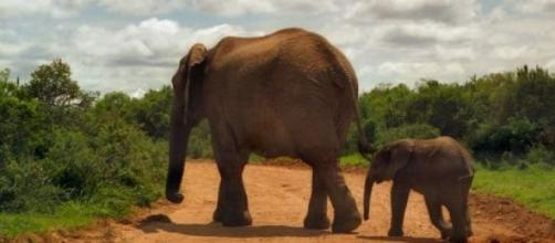 Deux éléphants dans un parc d'Afrique du Sud