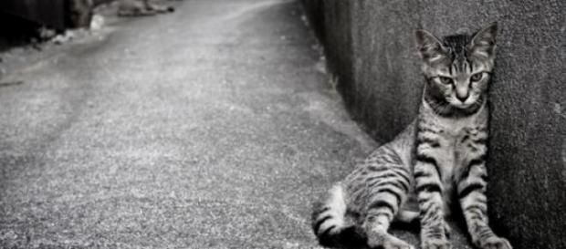 O pisica a trait cinci ani intr-un perete!