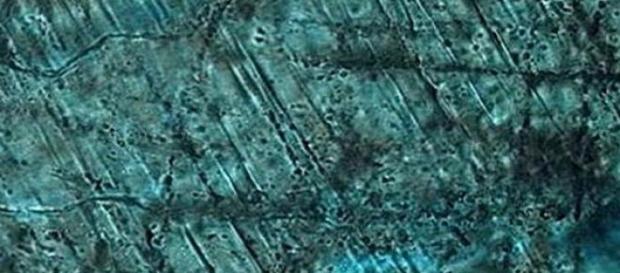 Crater provocat de un asteroid gigantic