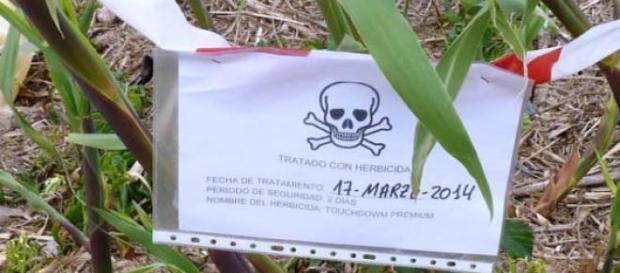 El Glifosato es un herbicida altamente peligroso .