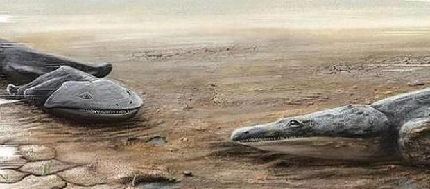 """Metoposaurus Algarvensis"" era um predador."