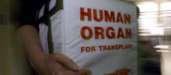 Organ for transplant carried to a hospital