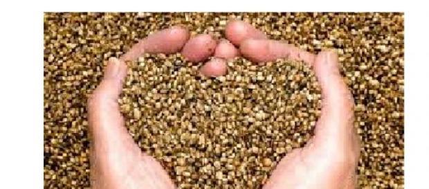 Semințele și efectele lor terapeutice