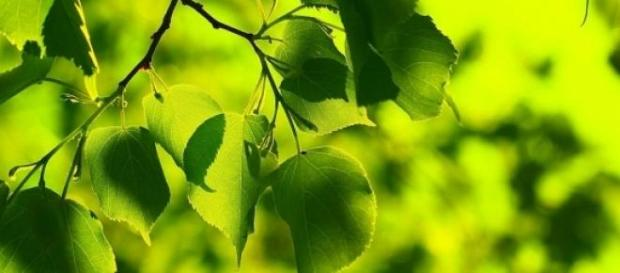 La actividad vegetal marca el ritmo de la vida