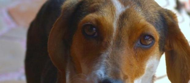 Los casos de robo de perros se están incrementando