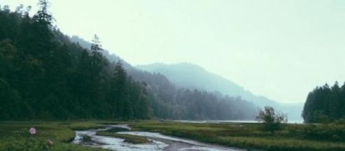 Bosque templado (foto de Paul Jarvis)
