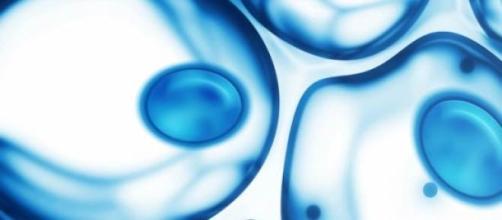 Se utilizan celulas de la piel del propio paciente
