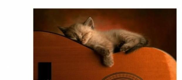 Calmarea felinor cu muzica