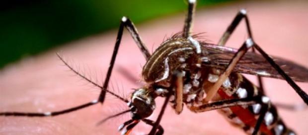 Notificação de casos de dengue em 2015 aumenta