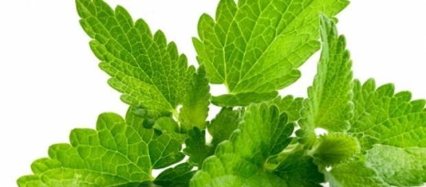 Frunzele de menta un miracol pentru sanatate