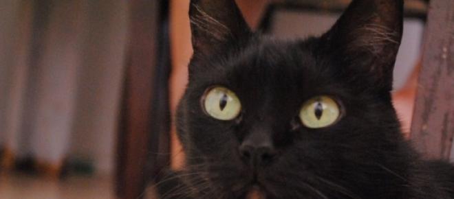 Gatos pretos ainda são vítimas de maus tratos