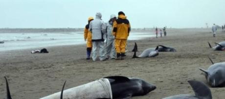 Mueren más de 100 delfines en Japón