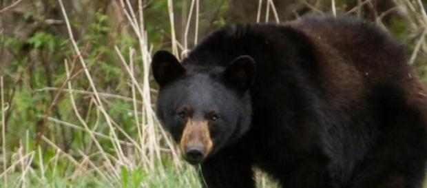 Cel mai periculos animal din Nordul Americii