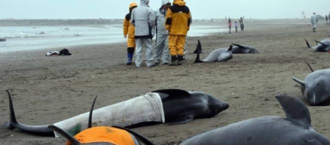 Más de 100 delfines mueren en la arena