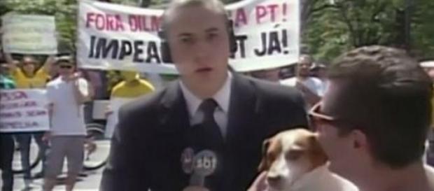Homem invade plantão do SBT com um cachorro