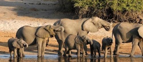 De nombreux Français optent pour les safaris.
