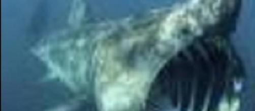 Squalo gigantesco avvistato vicino a Cervia