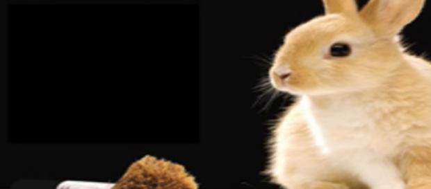 Animales en pruebas de cosméticos