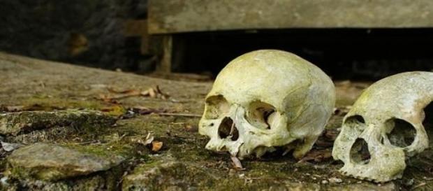 Unsere Vorfahren waren Kannibalen.