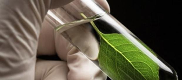 Crean sistema artificial de Fotosíntesis