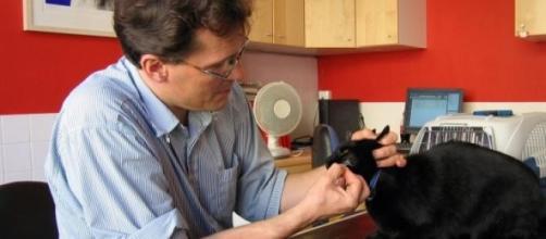 Curso gratuito para médicos veterinários