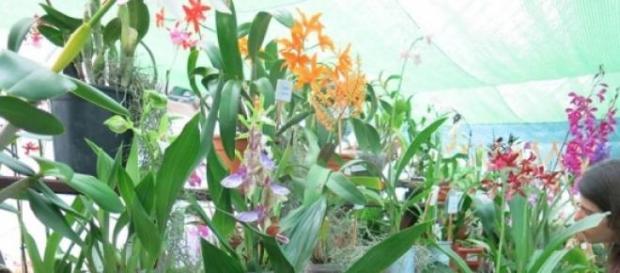 Festa da Primavera, Exposição de Orquídeas.