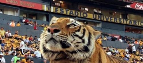 Tigres arranca los octavos de Libertadores