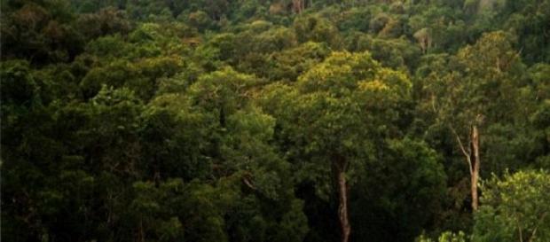 Una foto de la selva del Amazonas