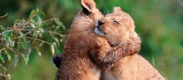 29 de abril: Día del animal