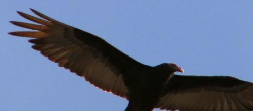Las Águilas volaron alto en Canadá