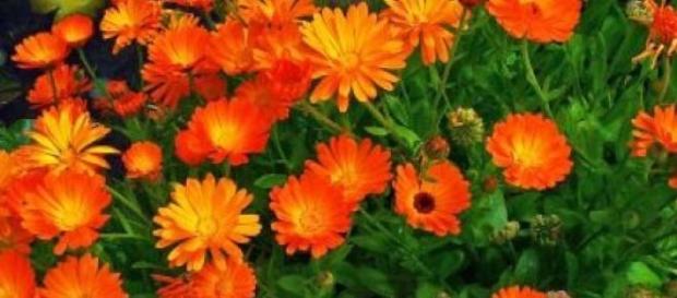 Plantele medicinale și calitățile terapeutice
