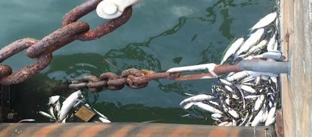 Cetesp investiga peixes mortos na área do incêndio
