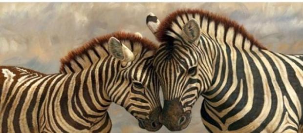 Fiecare zebra are un model diferit de dungi