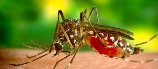 A doença não está no mosquito e sim na água. Vigie