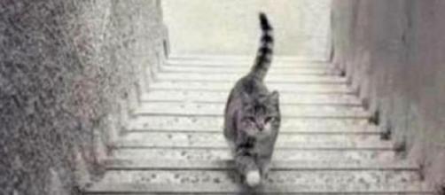 O gato sobe ou desce as escadas?