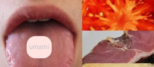 Los receptores se ubican en el centro de la lengua