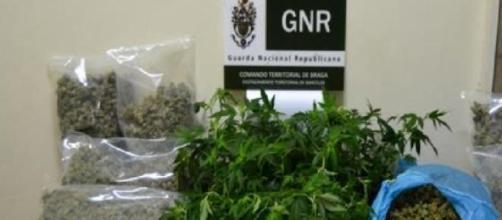 Droga apreendida pelo NIC da GNR de Barcelos