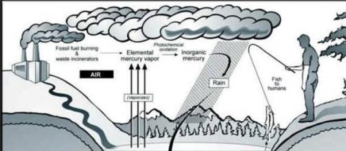 Inquinamento da mercurio delle acque