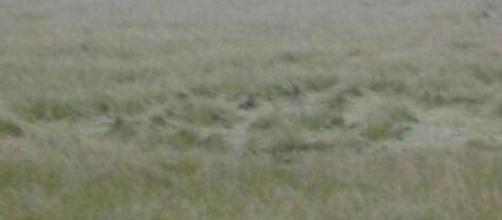 Ufo: cerchi nel grano a Valleogra.