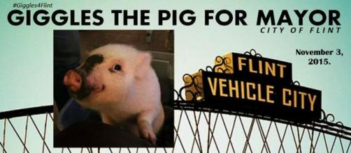 Giggles the pig for mayor!