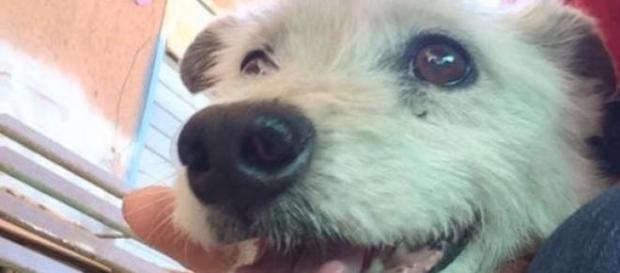 Ercolino, il cane vittima di violenza